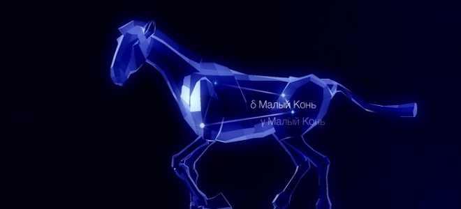 Созвездие Малый Конь — маленькое созвездие с интересной легендой