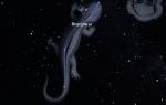 Созвездие Ящерица и его интересный астрономический объект