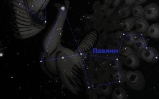 Созвездие Павлин и его необычное открытие