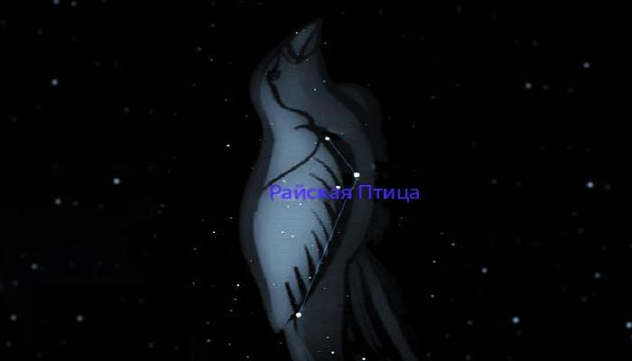 Созвездие Райская Птица