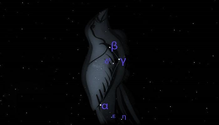 Звёзды созвездия Райская Птица